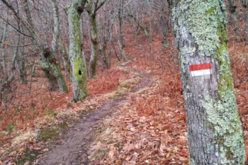 Single track Gello
